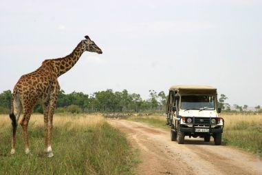 Кения. Сафари на Mitsubishi Pajero Pinin