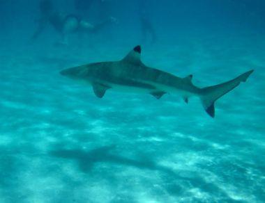 Подробности кругосветки Ocean2Ocean: Свадьба, не выходя из машины, Долина Смерти, Гавайи, Таити и акулы…