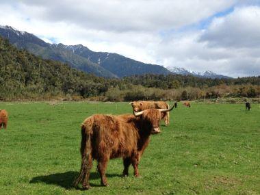 Небольшое путешествие по Новой Зеландии на Suzuki Swift