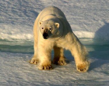 На «Жигулёнке» по России: От середины Волги до студёных морей (с экскурсом на Землю Франца-Иосифа)