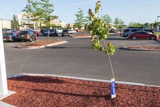 Оналяска, Висконсин: деревьям на новой станции подзарядки Tesla еще расти и расти