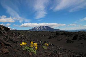 Путешествие по Камчатской земле на вулканы Толбачик, Ключевская сопка и Шивелуч
