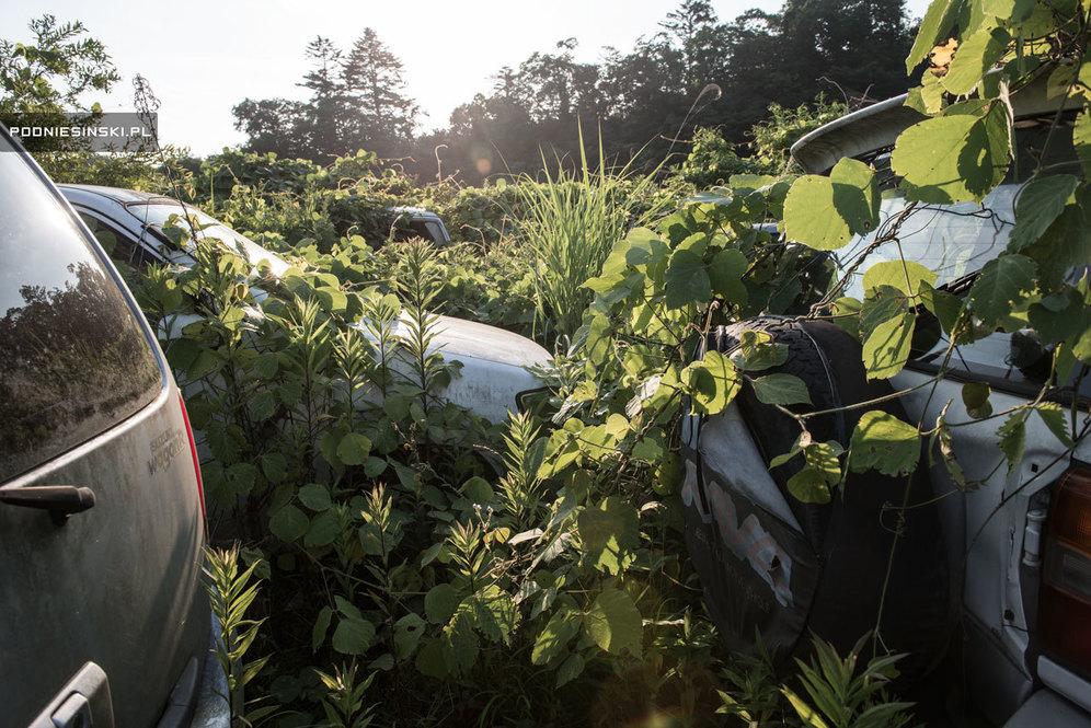 Машины тихо ржавеют в кустах