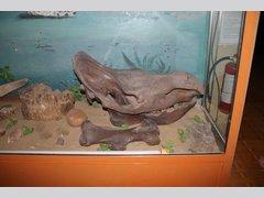 Динозавров (Музей)